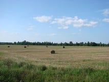 Feld mit geschnittenem Gras und Heu in Weißrussland lizenzfreie stockfotografie