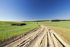 Feld mit Getreide Lizenzfreie Stockfotos