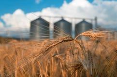 Feld mit Getreidespeichern für die Landwirtschaft Lizenzfreie Stockfotografie