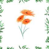 Feld mit grünem Laub und orange wilde Blumen auf einem weißen Hintergrund Nahtloses Muster des Aquarells Stockbilder