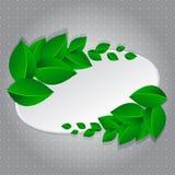 Feld mit grünen Blättern Stockfoto