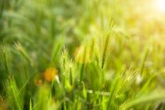 Feld mit Gras Stockfotografie