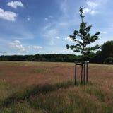 Feld mit Gras Stockfotos