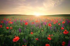 Feld mit Gras, violetten Blumen und roten Mohnblumen.  Stockbild