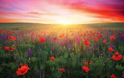 Feld mit Gras, violetten Blumen und roten Mohnblumen Stockbilder
