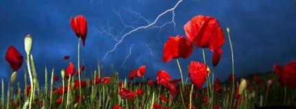 Feld mit hellen blühenden Mohnblumen Lizenzfreies Stockbild