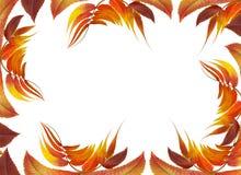 Feld mit Herbstblättern Stockfoto