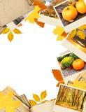 Feld mit Herbstblättern und -fotos Stockbilder