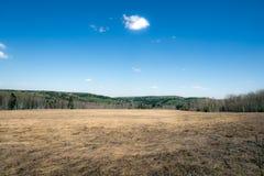 Feld mit Heu auf einem Hintergrund von Bäumen und von blauem Himmel Lizenzfreies Stockbild