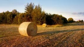 Feld mit Heuschobern nach der Ernte des Weizens Lizenzfreie Stockfotos