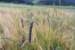 Feld mit hohen Gräsern Stockfoto