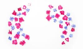 Feld mit Hortensieblume und blaue Bleiwurz blühen Lizenzfreie Stockbilder