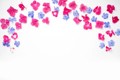 Feld mit Hortensieblume und blaue Bleiwurz blühen Lizenzfreies Stockbild