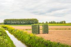 Feld mit Jungpflanzen in Staplungskisten Stockbilder