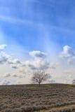 Feld mit kahlem Baum Lizenzfreie Stockfotos