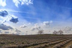 Feld mit kahlen Bäumen Stockfoto