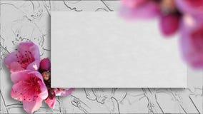 Feld mit Kirschblüte-Blumen Stockbilder