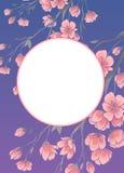 Feld mit Kirsche Kirschblüte blüht Vektorschablone Stockfotografie