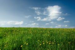 Feld mit Löwenzahn Lizenzfreie Stockfotografie