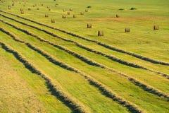 Feld mit Linien des trocknenden Strohs und runden Stapeln des abgeschrägten whe Lizenzfreies Stockbild