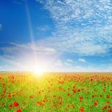 Feld mit Mohnblumen und blauem Himmel Lizenzfreies Stockfoto