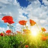Feld mit Mohnblumen und Sonne Stockfotografie