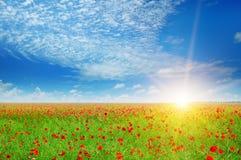 Feld mit Mohnblumen und Sonne Lizenzfreie Stockfotografie