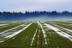 Feld mit Nebel am Wald im Winter Stockfoto