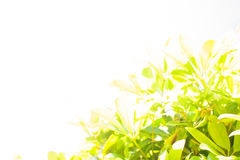 Feld mit Palmblättern Stockfotografie