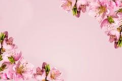 Feld mit Pfirsichblumen Stockbild