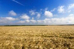 Feld mit reifem Roggen Stockfotos
