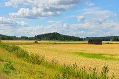 Feld mit reifem Roggen Stockbilder