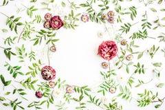Feld mit rosa Rosen, Niederlassungen, Blättern und den Blumenblättern auf weißem Hintergrund Stockbilder