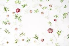 Feld mit rosa Rosen, Niederlassungen, Blättern und den Blumenblättern auf weißem Hintergrund Lizenzfreies Stockfoto
