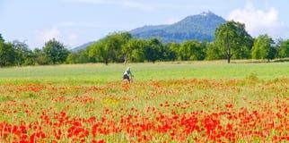 Feld mit roten Mohnblumen Stockfoto