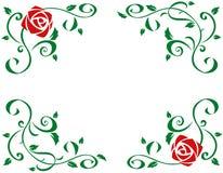 Feld mit schönen Rotrosenblumen Stockbild