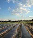 Feld mit schwarzen Plastikreihenabdeckungen Lizenzfreies Stockfoto