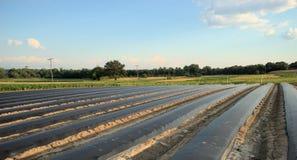 Feld mit schwarzen Plastikreihenabdeckungen Stockbild