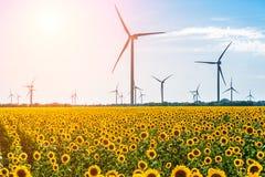 Feld mit Sonnenblumen und eco Energie, Windkraftanlagen Stockfotografie
