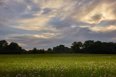 Feld mit Sonnenuntergang Stockfotos