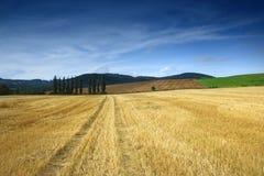 Feld mit tres und lue Himmel Lizenzfreie Stockfotografie