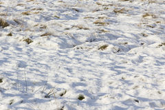 Feld mit wallend Schneedecke- und Grasbüscheln Lizenzfreie Stockfotos