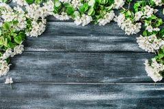 Feld mit weißen Blumen und Niederlassungen auf altem Retro- Holztischhintergrund Lizenzfreies Stockbild