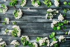Feld mit weißen Blumen und Niederlassungen auf altem Retro- Holztischhintergrund Lizenzfreie Stockfotografie