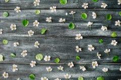 Feld mit weißen Blumen und Niederlassungen auf altem Retro- Holztischhintergrund Stockbilder