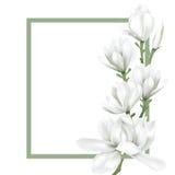 Feld mit weißer Blume stock abbildung