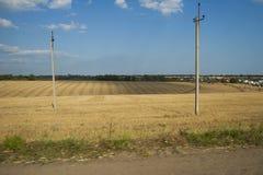 Feld mit Weizen Stockfoto