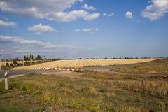 Feld mit Weizen Stockbilder