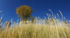Feld mit wilden Gräsern Stockbild