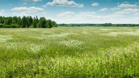 Feld mit Windwellen und -wolken stock footage